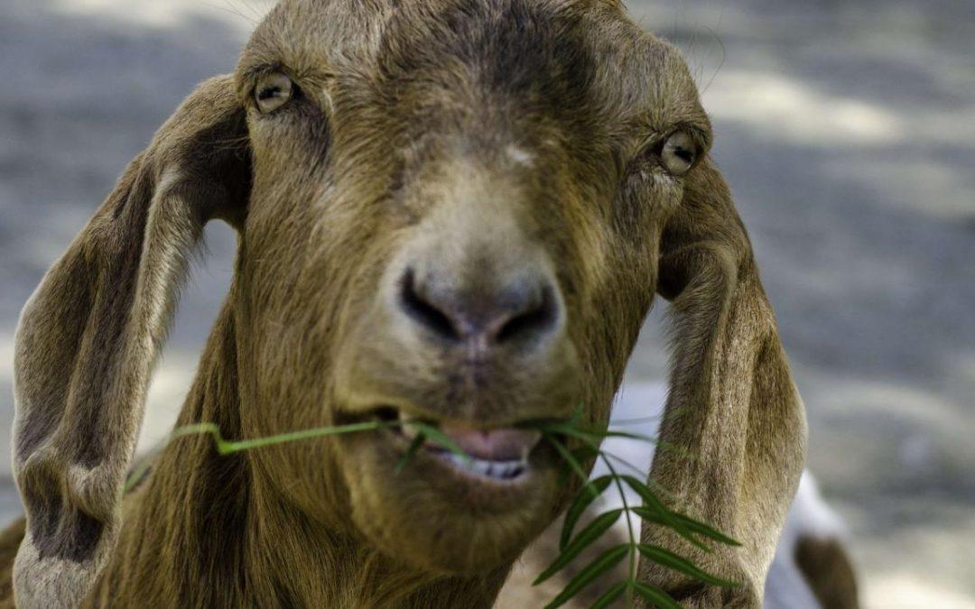 NRDtv+ DIY-TIP : een goed gesprek met dieren!